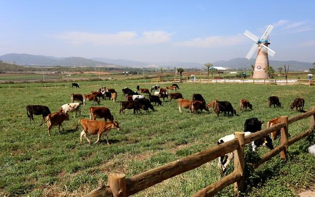 Đầu tư phát triển cả quy mô lẫn công nghệ, hệ thống trang trại của Vinamilk tăng trưởng ấn tượng