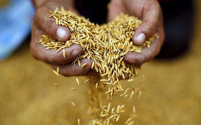 Chuyên gia Thái Lan đánh giá cao chiến lược gạo của Việt Nam