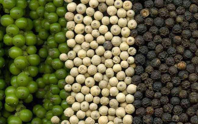 Dự báo giá hạt tiêu sẽ tăng do nhiều nơi mất mùa