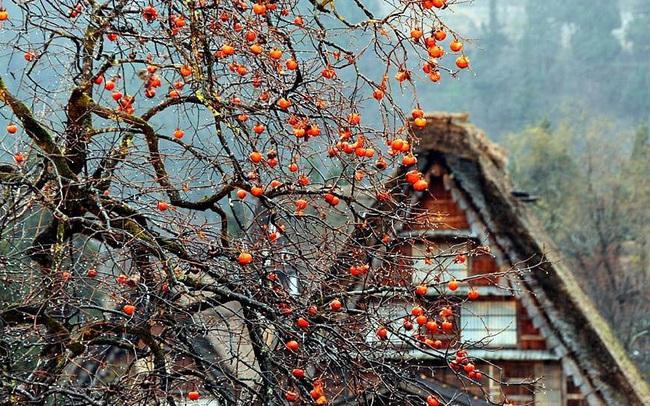 """""""Ngẩn ngơ"""" trước sự quyến rũ của những ngôi nhà mái dốc thuộc ngôi làng đẹp nhất Nhật Bản"""