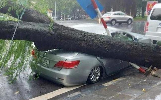 Cây cổ thụ bật gốc đổ đè bẹp xe Camry ở Hà Nội