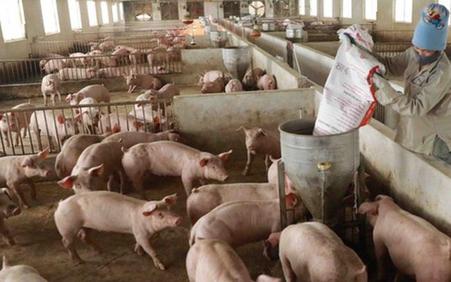 """Giá lợn hơi chạm đáy, thịt lợn ở chợ và siêu thị vẫn """"đứng im"""""""