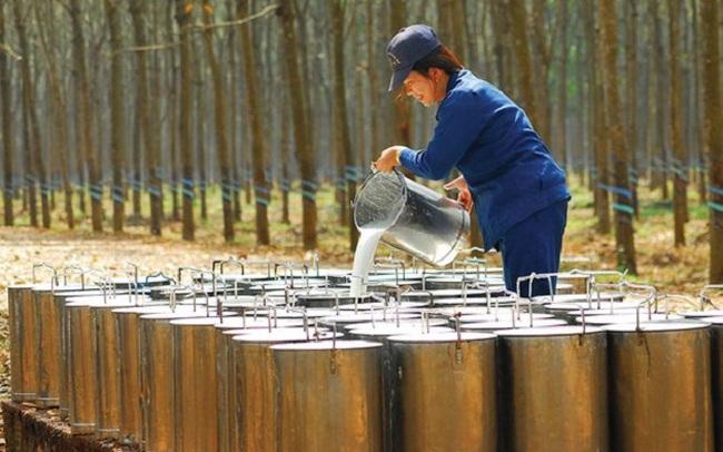 Công ty mẹ Cao su Phước Hòa (PHR) báo lãi quý 3/2021 giảm 54% so với cùng kỳ, lợi nhuận 9 tháng chỉ đạt 16% kế hoạch năm