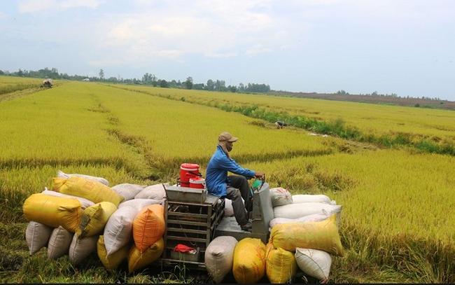 Nông nghiệp Cần Thơ (TSC) triển khai chào bán 49 triệu cổ phiếu cho cổ đông hiện hữu