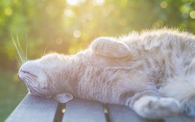 Từ thói quen tắm nắng của con mèo tới phương pháp chữa bệnh đoạt giải Nobel Y học, cứu sống hàng ngàn người