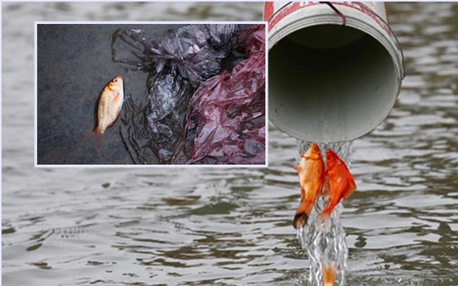 Sông hồ oằn mình gánh rác mỗi dịp tiễn ông Công ông Táo, có nên giữ tục thả cá phóng sinh hay không?