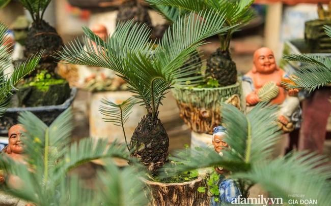 Vạn tuế bonsai của nghệ nhân Hà thành giá hàng chục triệu đồng vẫn hút khách dịp Tết