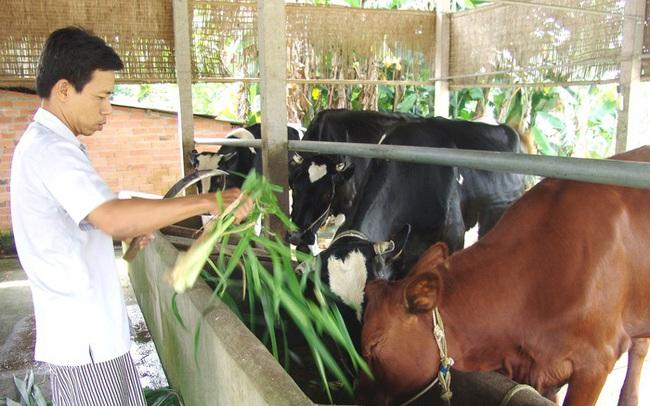 """Vilico """"bắt tay"""" đối tác Nhật lập liên doanh bò thịt, khai thác thị trường 10 tỷ USD"""