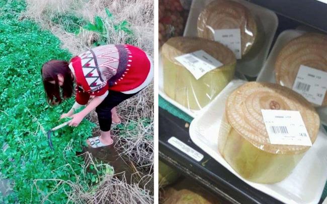 """Nghịch lý thú vị: Rau của Việt Nam sang Nhật bị coi là cỏ nhưng những loại cây """"rẻ bèo"""" lại được bán với giá cao trong siêu thị"""