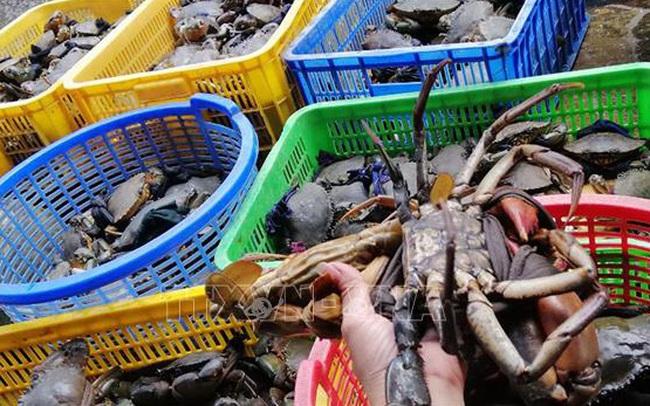 Giá cua biển ở Trà Vinh tăng mạnh