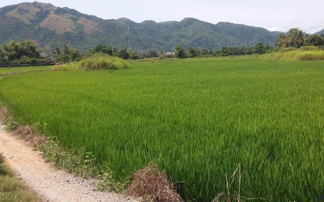 Thủ tướng phê duyệt chuyển mục đích sử dụng 65 ha đất nông nghiệp ở Long An