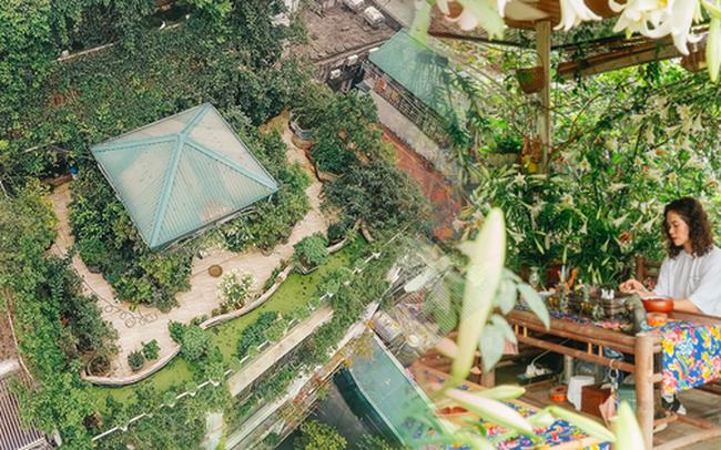 """Flycam """"khu rừng"""" trên sân thượng của người phụ nữ Hà Nội: Rộng 200m2, 1.500 hoa loa kèn bao phủ"""