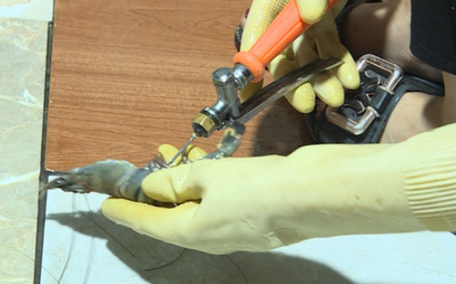 """Chuyên gia Nguyễn Duy Thịnh: 10kg tôm có thể bị bơm tới 2kg tạp chất, cách để nhận biết """"tôm bẩn"""""""