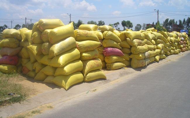 Trung Quốc giảm mua vào, nghẽn đầu ra khiến giá gạo nếp sụt thê thảm