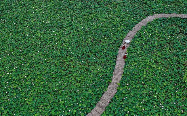 """Du khách quốc tế """"phát cuồng"""" trước cảnh hoa sen bạt ngàn ở một địa điểm nổi tiếng của Việt Nam"""