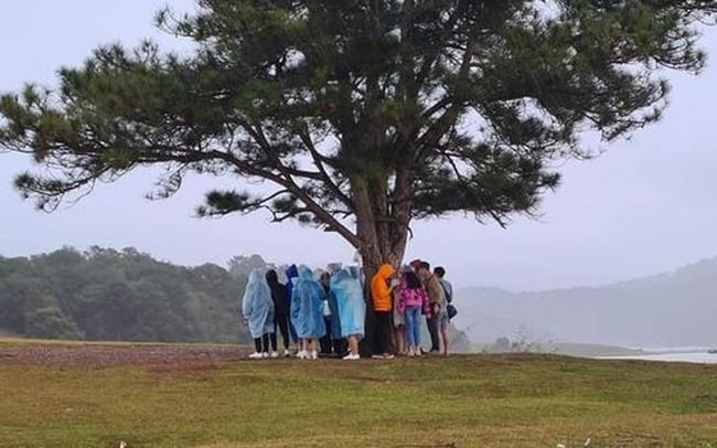 Nhóm du khách trú mưa dưới cây thông cô đơn nổi tiếng ở Đà Lạt, nhưng lại khiến dân mạng lạnh gáy vì lý do này