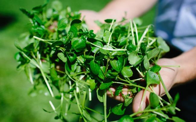 Loại rau chứa canxi gấp 4 lần sữa, sắt gấp 4 lần rau chân vịt tưởng quý hiếm đắt đỏ không ngờ lại là món bình dân ở Việt Nam