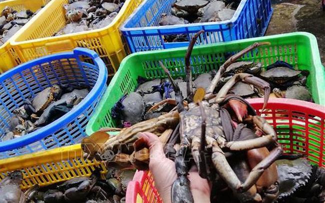 Nông dân phấn khởi khi giá nhiều loại hải sản tăng cao