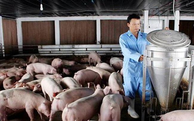 Giá thức ăn chăn nuôi tăng cao: Nông dân lỗ nặng