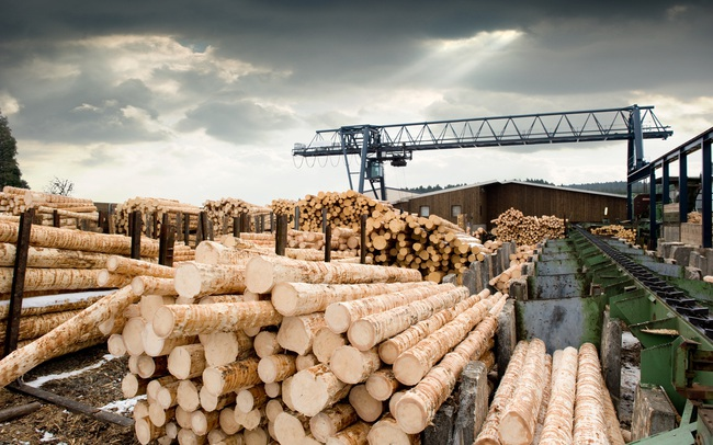 """""""Cơn điên"""" của giá gỗ cuối cùng đã hạ nhiệt"""