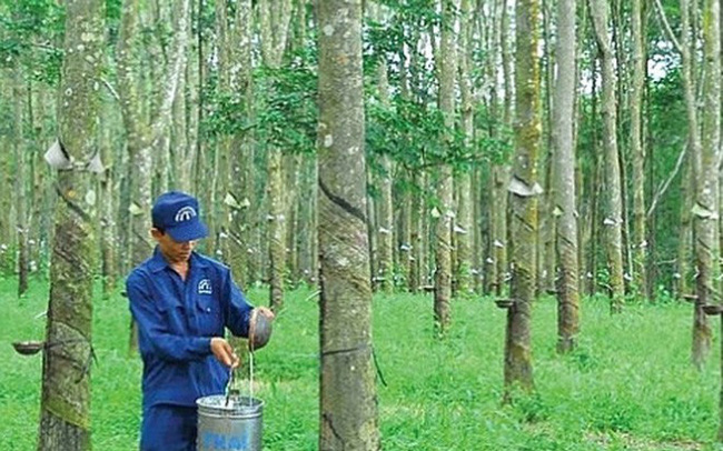 Cao su Đồng Phú (DPR) dự kiến phát hành cổ phiếu thưởng tăng vốn điều lệ tỷ lệ 100%