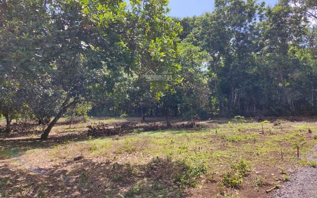 Đồng Nai chuyển 139ha đất rừng thành đất ở