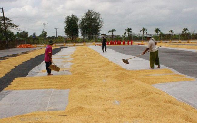 Xuất khẩu gạo Việt Nam giảm cả về lượng lẫn giá trị
