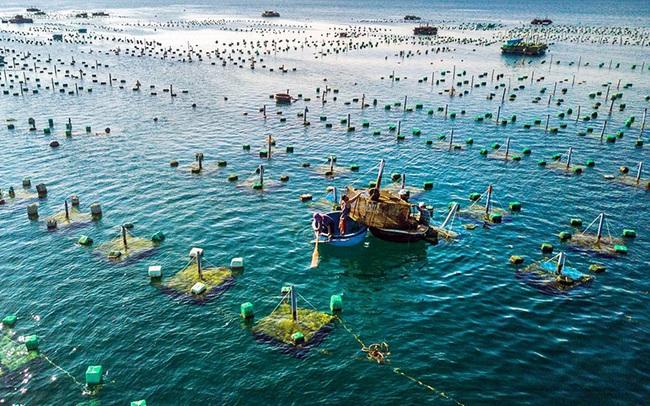 Bổ sung hơn 462 tỷ đồng cho 27 địa phương nhằm phát triển thủy sản