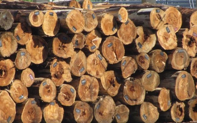 Việt Nam nhập khẩu loại gỗ nào nhiều nhất?