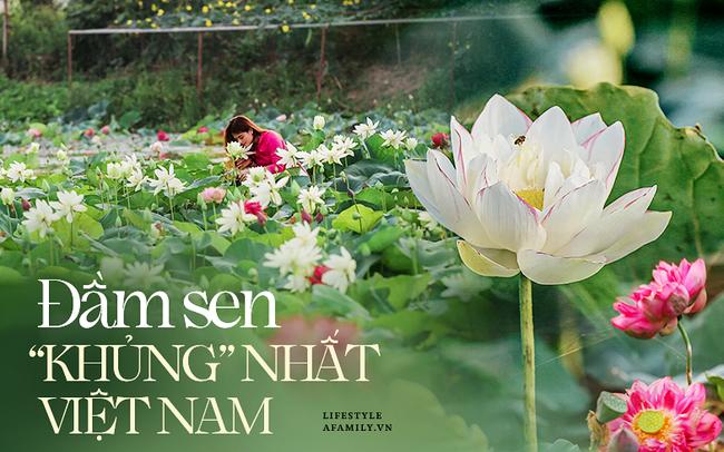 """Đầm sen """"KHỦNG"""" NHẤT VIỆT NAM với gần 170 loại sen quý trên khắp thế giới, mới mở được 2 năm nên nhiều người yêu sen nhất Hà Nội cũng chưa chắc biết"""