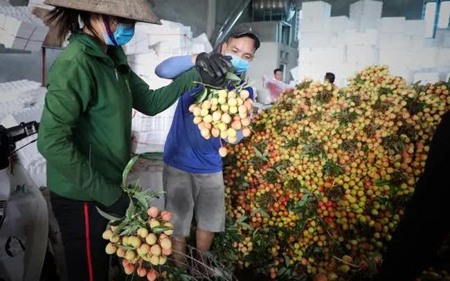 Bắc Giang thành công trong tiêu thụ vải thiều bất chấp COVID-19