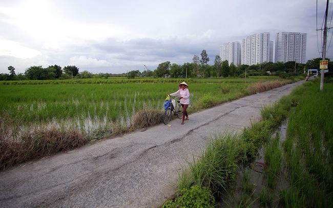 Bình Chánh chuyển hơn 1.300ha đất nông nghiệp sang phi nông nghiệp
