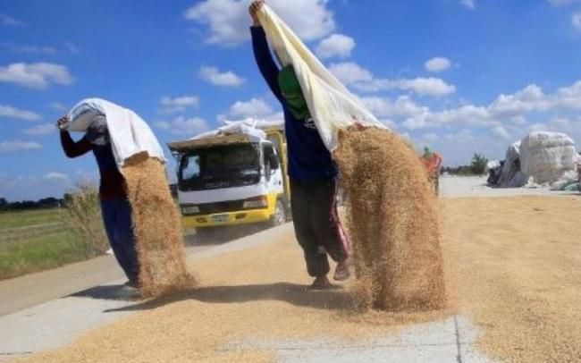 Nguy cơ xuất khẩu gạo sụt giảm do Philippines dự định chuyển sang mua gạo Ấn Độ giá rẻ