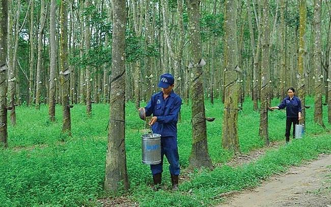 Cao su Đồng Phú (DPR) chốt quyền nhận cổ tức bằng tiền tỷ lệ 15%