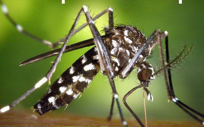 5 mẹo đuổi muỗi sạch bách khỏi nhà, không lo độc hại