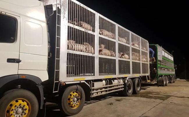 Hàng nghìn con lợn, gà vào TP HCM bị 'tắc' do quy định hạn chế ra đường sau 18h