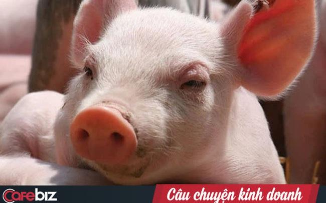 """Không chỉ là cứu cánh của bầu Đức, chăn nuôi heo còn là """"cần câu cơm"""" của hàng loạt doanh nghiệp lớn như C.P, Masan, Hoà Phát…"""