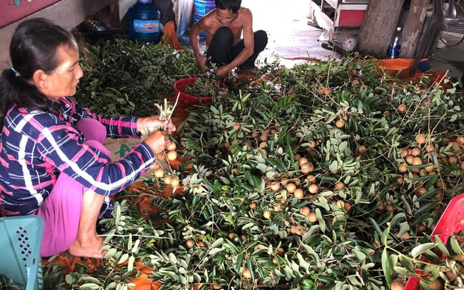 Bà Rịa-Vũng Tàu cho doanh nghiệp vay vốn lãi suất 0% để phục hồi sản xuất