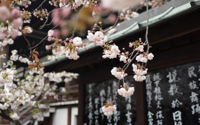 """Triết lý sống đơn giản của người Nhật: """"Luôn đổ đầy bát trước khi trả lại"""" và bài học tu dưỡng bản thân, mở rộng đường đời mà ai cũng nên học tập"""