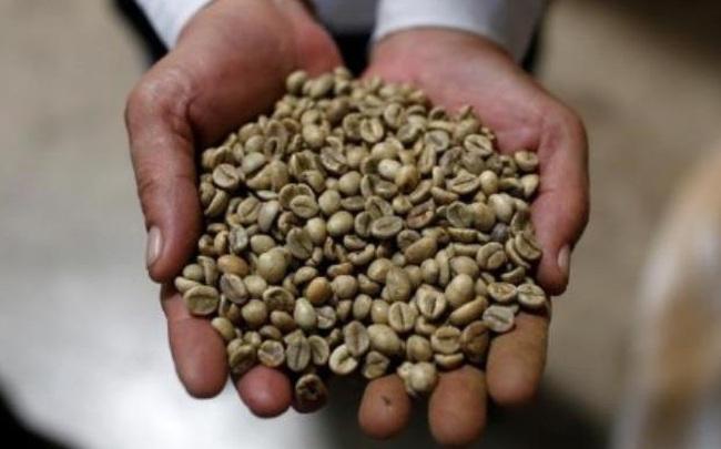 Giá cà phê giảm mạnh nhất kể từ 2008, tiếp tục chuỗi ngày biến động mạnh