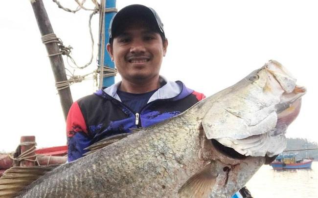 """Ngư dân Quảng Ngãi câu được cá chẽm """"khủng"""" dài 1m, nặng 14 kg"""
