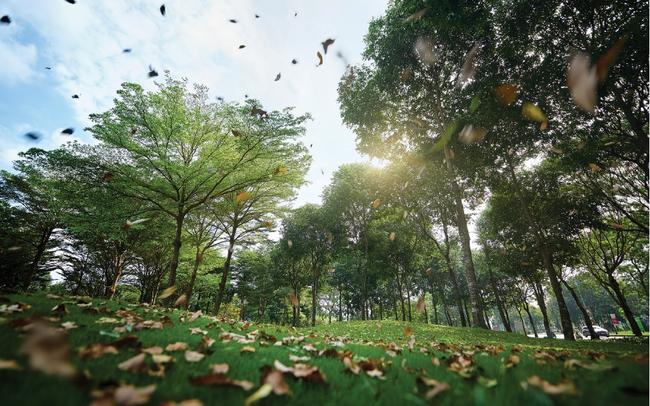 Đô thị thông minh phải gắn liền với môi trường bền vững