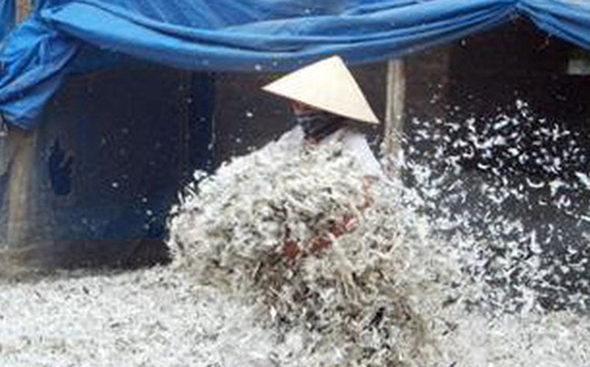 Trung Quốc mua gần 20 triệu USD lông gà, lông vịt của Việt Nam để làm gì?
