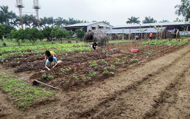 Đại gia lao tâm khổ tứ vì chôn hàng chục tỉ đồng vào farmstay, mua đất 6 triệu đồng/m2 lúc sốt, rao bán mãi không ai mua, phải bán cho chủ cũ 3 triệu đồng/m2