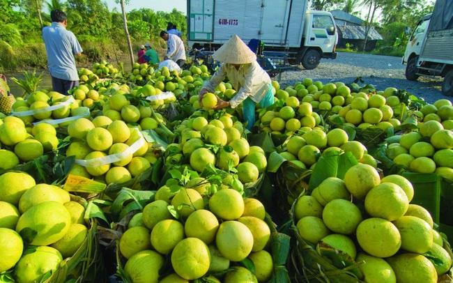 Hàng nghìn tấn nông sản đang vào vụ ở Sóc Trăng cần được hỗ trợ tiêu thụ