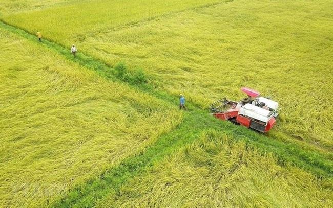 Đồng Tháp chuyển hơn 30ha đất trồng lúa sang đất phi nông nghiệp