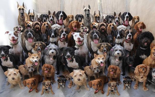 Câu hỏi phỏng vấn: 1 con chó có 4 chân, vậy 50 con chó có bao nhiêu chân? Câu trả lời thú vị khiến người tuyển dụng gật gù tâm đắc!
