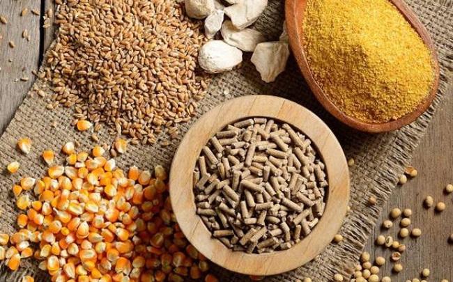Xu hướng giá nguyên liệu nhập khẩu trong quý IV và biến số của ngành chăn nuôi trong nước