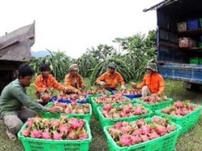 Mỹ tăng nhập khẩu các loại rau, quả tươi Việt Nam