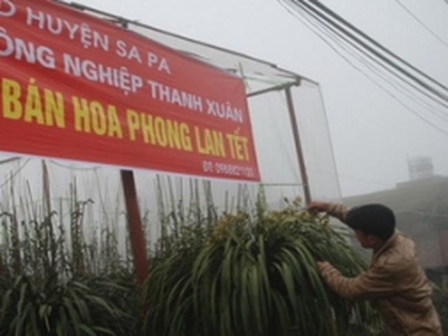 Người trồng hoa địa lan ở Sa Pa trúng giá vào dịp Tết